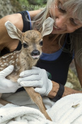 Founder Diane Nicholas with baby fawn