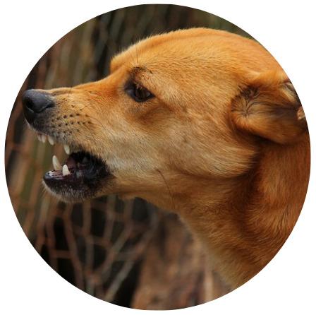 loose attacking dog